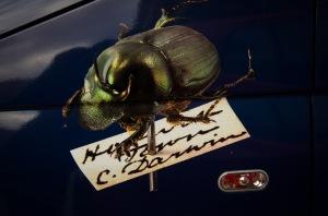 One of our precious Darwin specimens