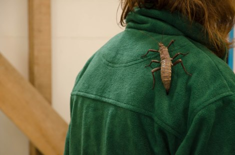 Creepy crawlies get everywhere. A stick insect roams at the Minibeast Mayhem stall.