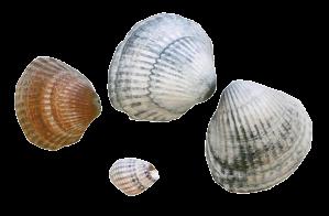 _P1040457_shells