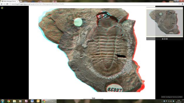 3d trilobite