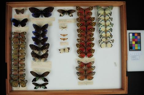 Moths in a drawer made by Brian Edmondson