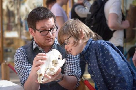 Examining the skull and explaining the capybara jaw movements.