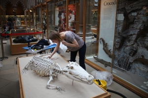 Nicola working on the crocodile