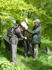 Zoë and Darren putting up a malaise trap