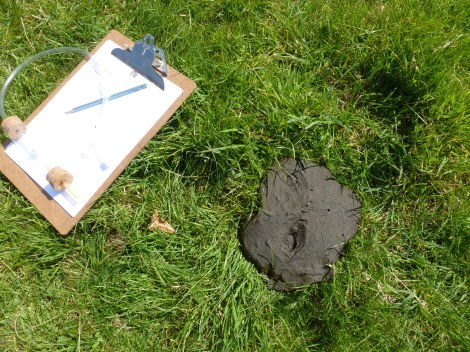 Clipboard, pooter and a cow pat!