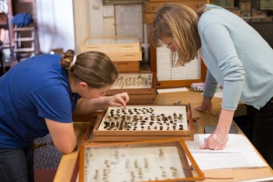 Jane and Amoret researching bee specimens