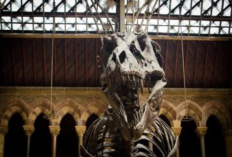 MNH - T rex
