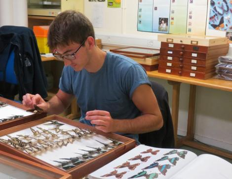 James organising the South Sudanese butterflies