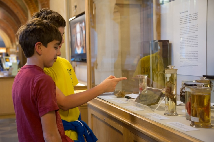 Visitors pick out their favourite specimen