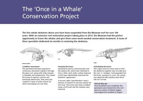 Whale aisle interp v32