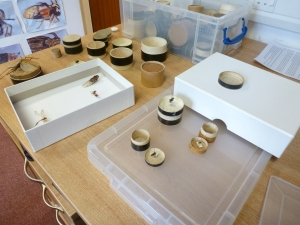 Preparing specimens in the Life collections