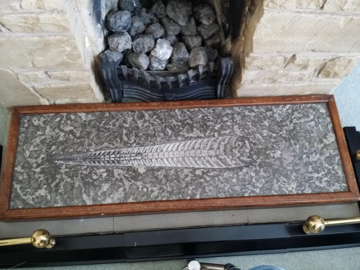 The donated nautiloid fossil in its original location in the family home