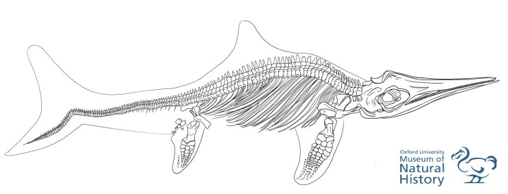 Ichthyosaur to be used for education resources