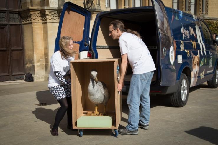 Ellie and Darren lift the Dodo into the van