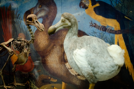 The Dodo model (right) which will be joining us for the adventure