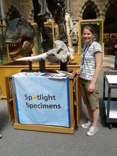 Ruth presenting the whale to visitors as part of our Spotlight Specimens strand