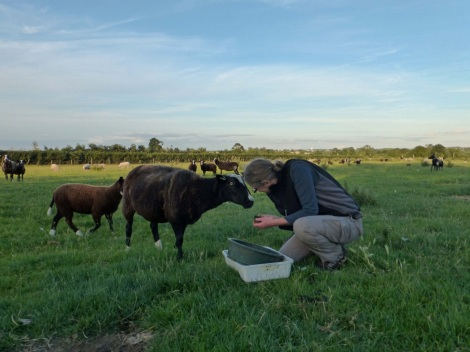 Ceri Watkins making new friends during DUMP fieldwork