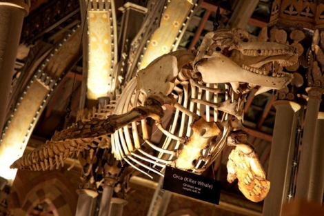 natural-history-museum-oxfordsmall-41