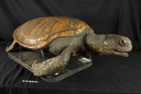 Turtle post-treatment