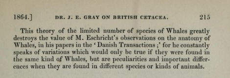 John Edward Gray 'destroying' Eschricht's observations. From Gray, J. E. 1864. On the Cetacea which have been observed in the seas surrounding the British islands.