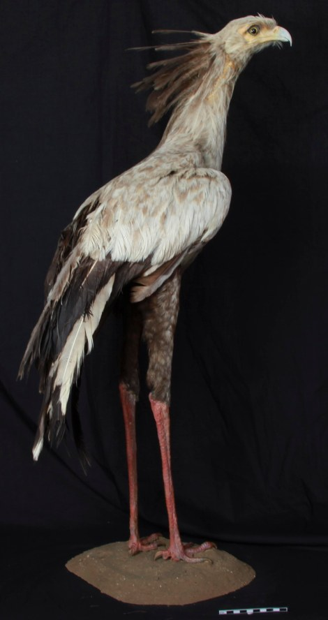 Before treatment, with missing wing and tail feathers