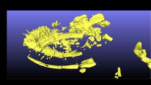 A CT scan of the plesiosaur's skull, which is still inside a clay block