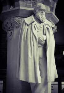 The Museum's statue of Darwin