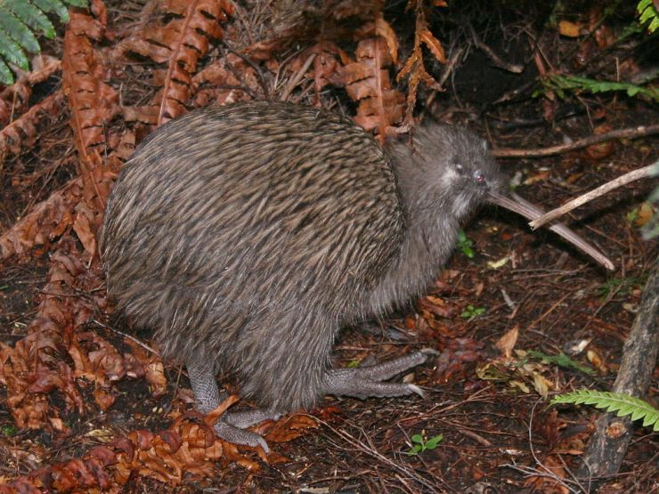 By Glen Fergus (Own work, Stewart Island, New Zealand) [CC BY-SA 2.5 (http://creativecommons.org/licenses/by-sa/2.5)], via Wikimedia Commons