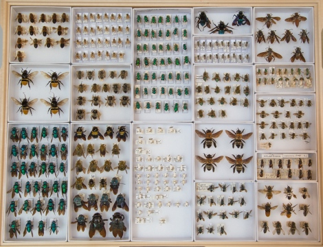 A selection of specimens from the Museum's collection, which shows how varied bees can be.