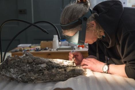 Juliet at work on the plesiosaur skull