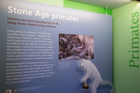 Stone Age Primates display in the Museum