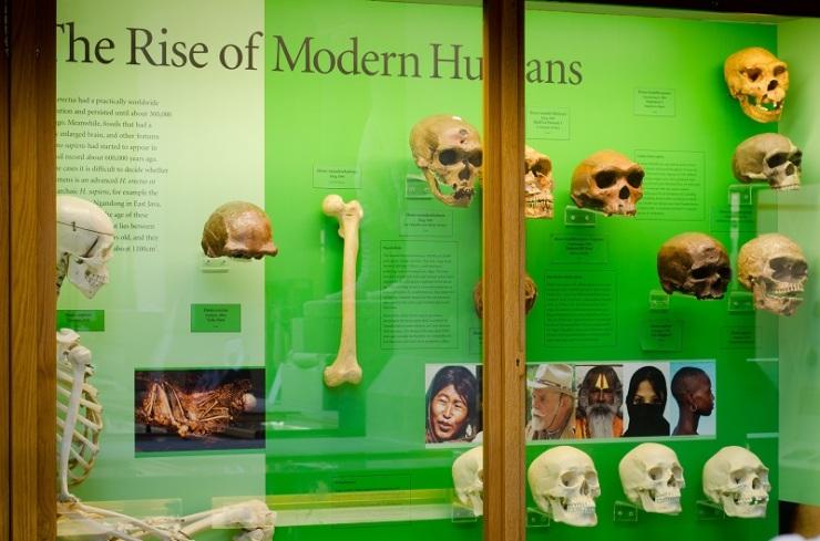Rise of Modern Humans display