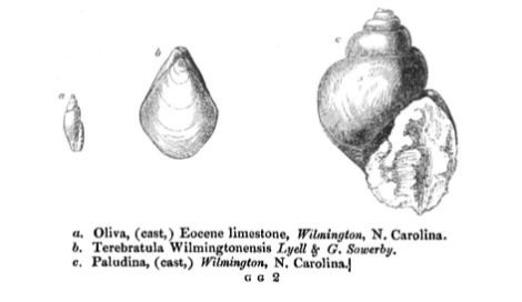 'Observations on the White Limestone and other Eocene or Older Tertiary Formations of Virginia, South Carolina and Georgia' by Charles Lyell, 1845