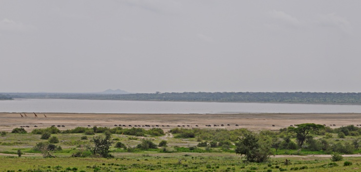 Lake Ndutu located at the south western end of Olduvai Gorge. Early hominins would have occupied a similar lake environment. Photo Credit: Tomos Proffitt.