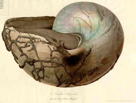 nautilusimperialis-for-web