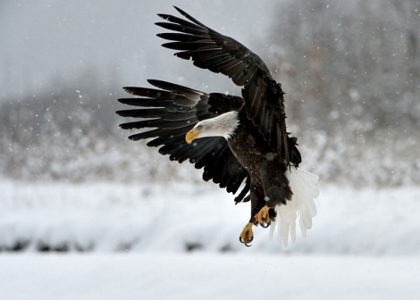 3-landing-on-snow-800px