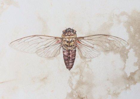 Deidre Bean - Cicada