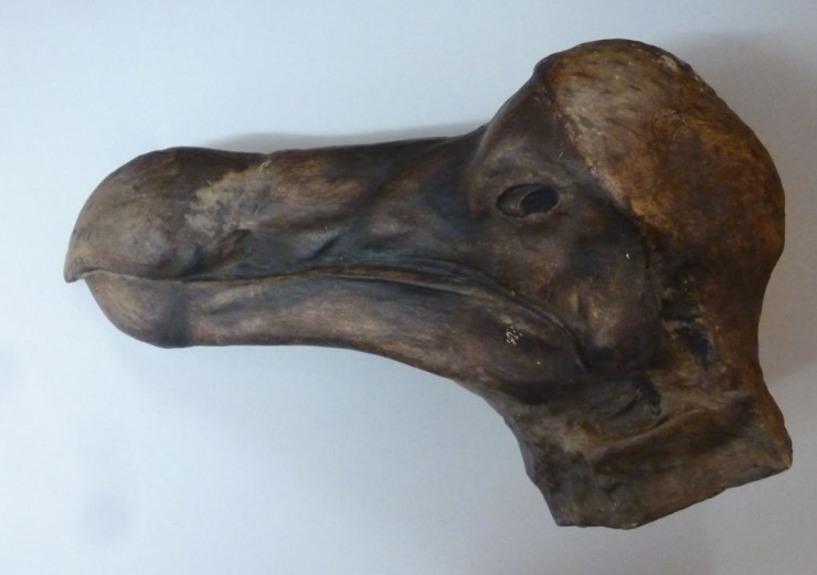 One of the many casts in the Oxford University Museum of Natural History, this one has been painted to match the original specimen