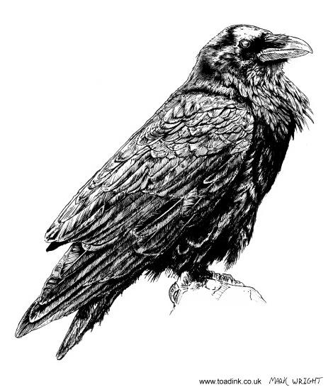 Mark Wright - Raven