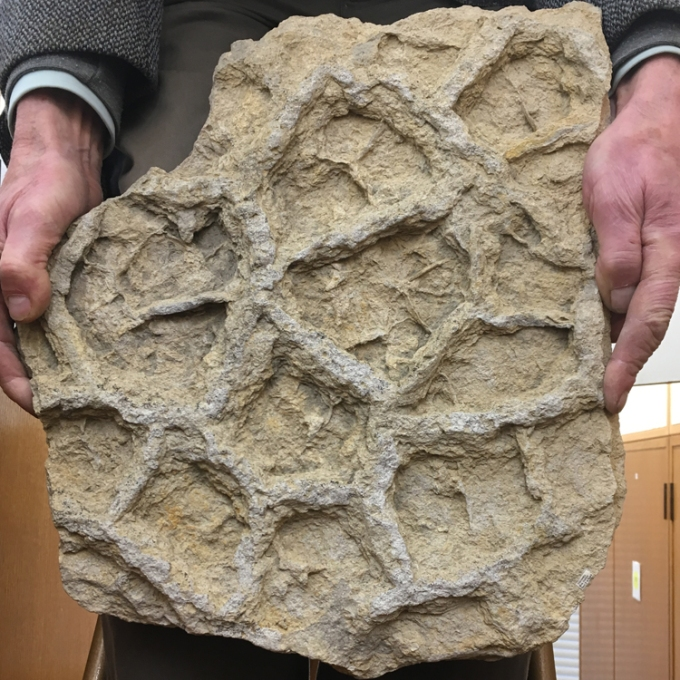 trace-fossil