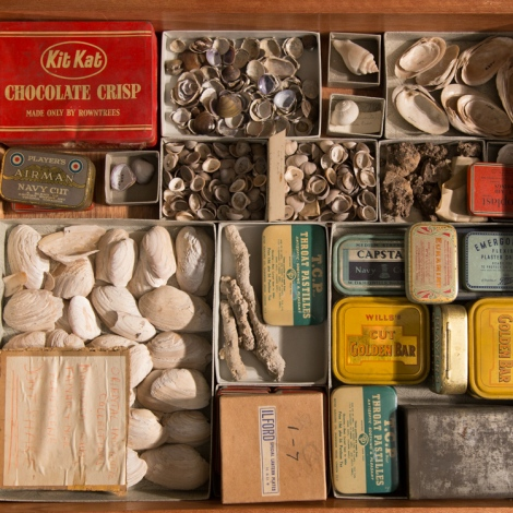 A miscellany of boxes for a collection of shells