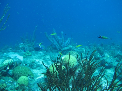 Under the sea, Curaçao, Caribbean. Image: G van Moorsel, Ecosub