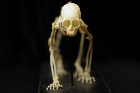 Is it real  Skeletons and bones  More Than A Dodo