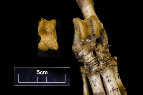 skeleton radiocarbon dating