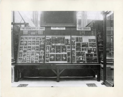 Early Dodo display case