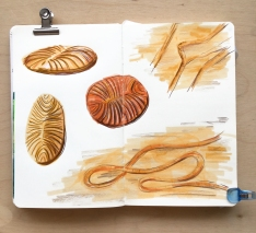 Trace fossil studies drawn in Tombow brush pens and Polychromo pencils.