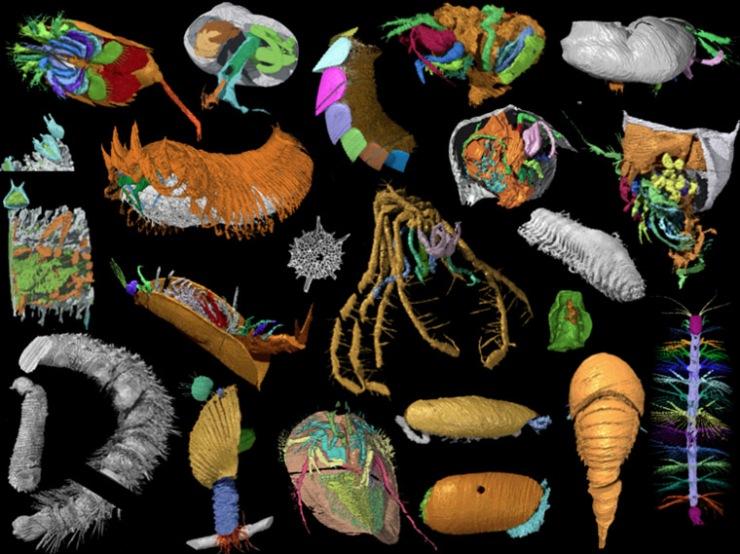 Coloured digital models of animals in strange shapes