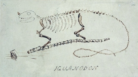 Ink drawing showing the skeleton of dinosaur
